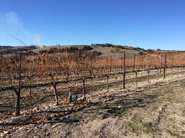 Calcereous Vineyard
