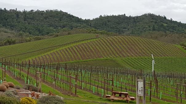 Abacela Wines - Vineyards.jpg