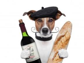 Wine - Dog in France