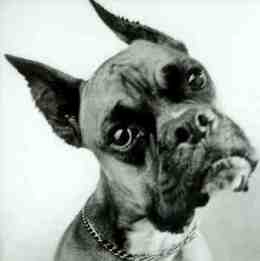 Dog confused dog20